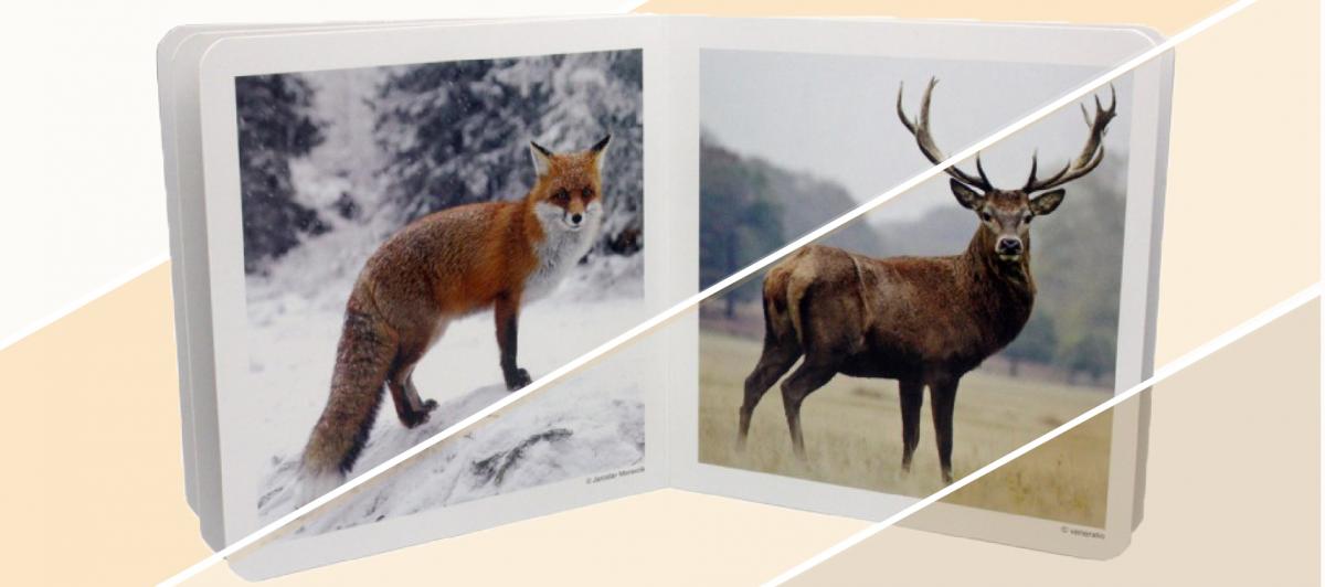 Nowordbooks: los libros de imágenes que muestran la realidad a los peques
